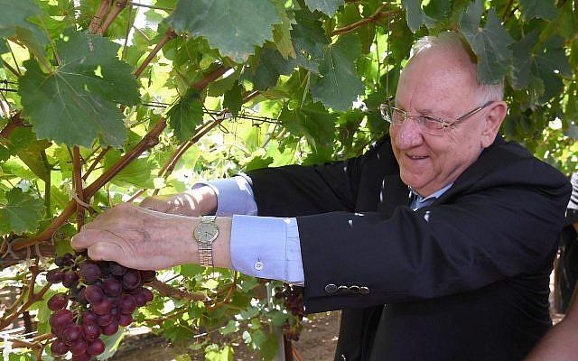 Új szőlőfajtát neveztek el a nemrégiben elhunyt izraeli first lady tiszteletére