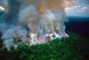 Brazília erdői lángokban, Bolsonaro szerint a tüzek szándékosak