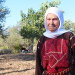 Valahol Ciszjordániában egy idős, beteg nagymama hiába várja amerikai unokáját
