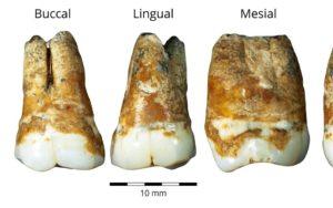 Európai migránsok fogaira bukkantak egy izraeli barlangban