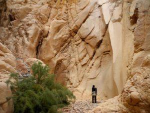Új természetvédelmi területek nyílnak Júdea-Szamáriában