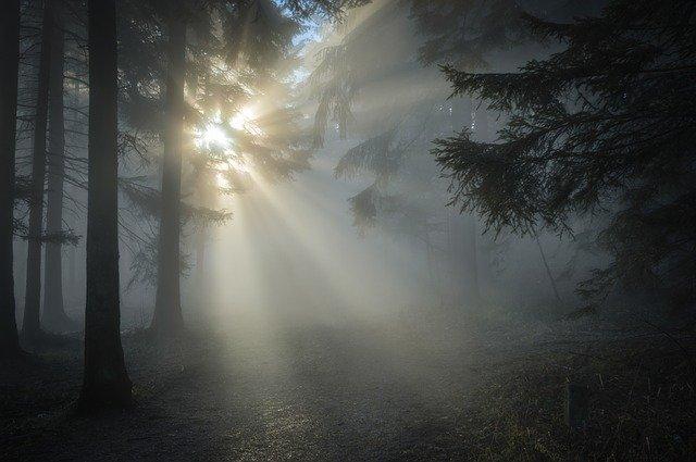 Az örökjáradéktól a természetes fényig — Heti Grün
